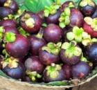 Mangosteen Fruit – Queen Of Fruits